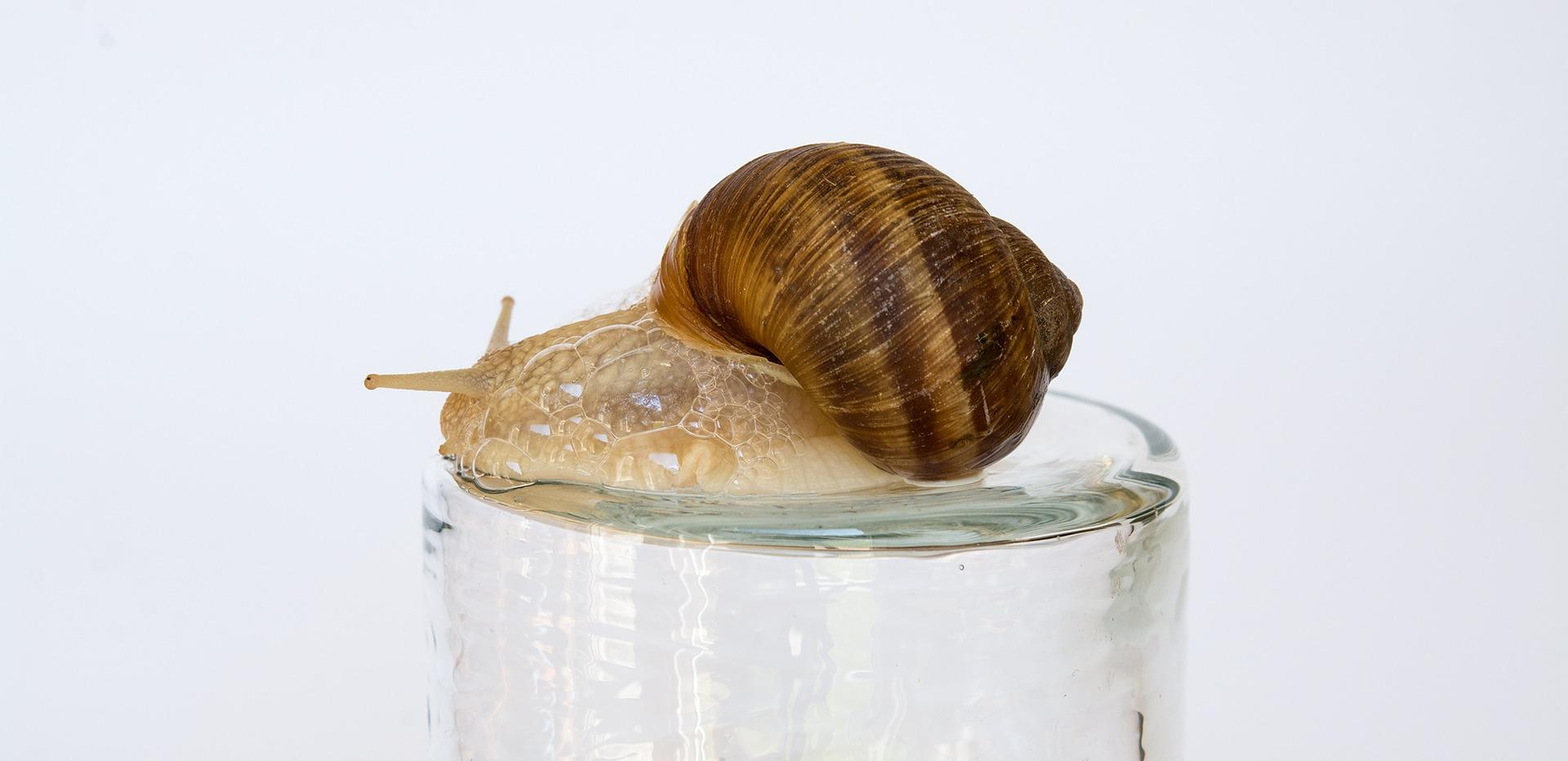 snail-1635759_1920