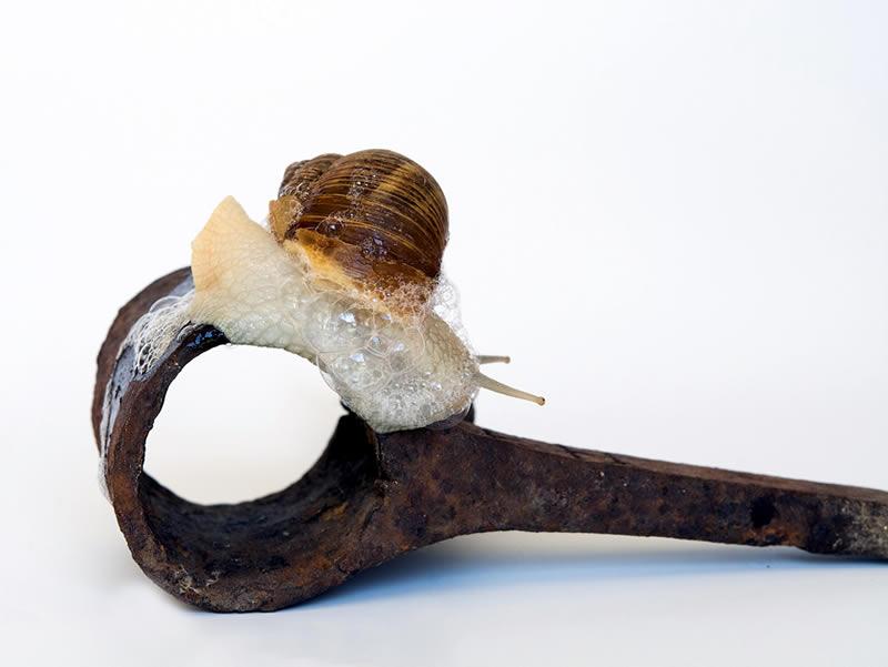 snail-1715104_1920