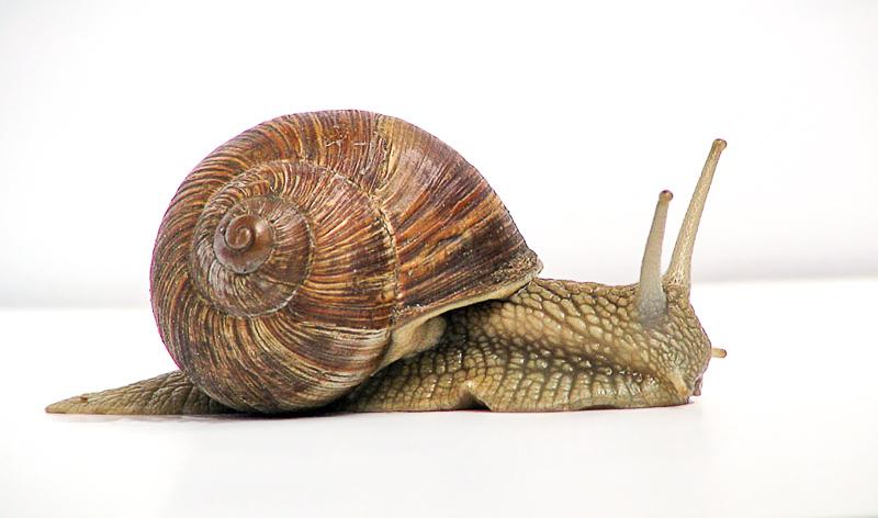 Vista lateral caracol