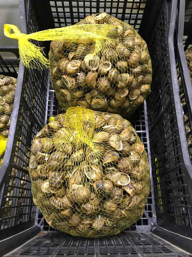 mallas-de-caracoles