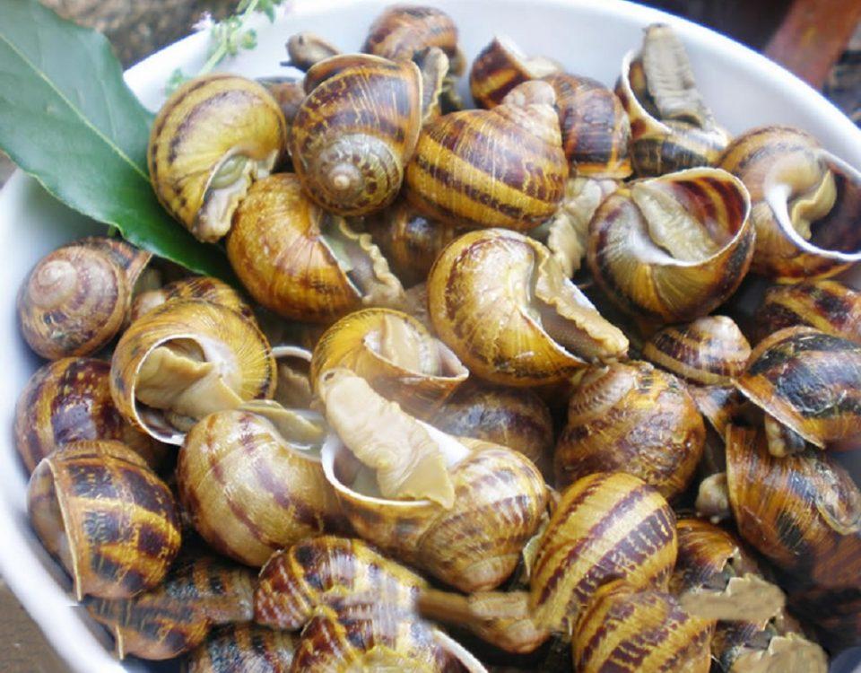 Beneficios de comer caracoles de granja