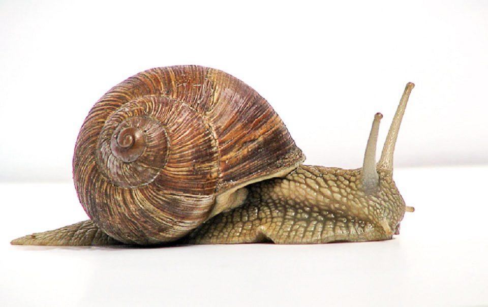 ciclo de vida de los caracoles