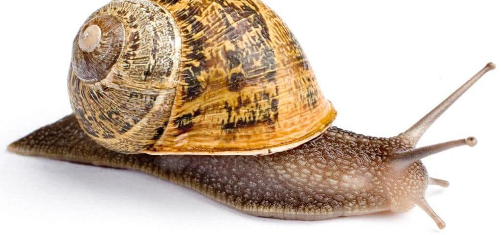 secretos para criar caracoles