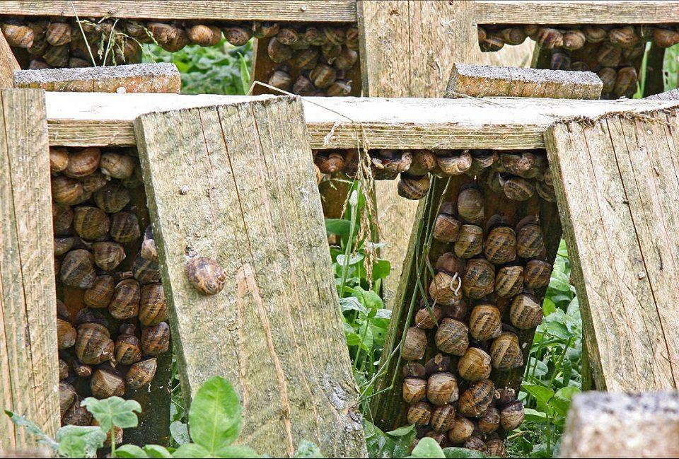 granja de caracoles en casa